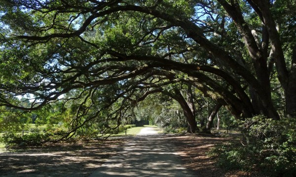 Charleston Tea Plantation, South Carolina