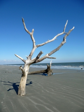 Hunting Island Beach, South Carolina