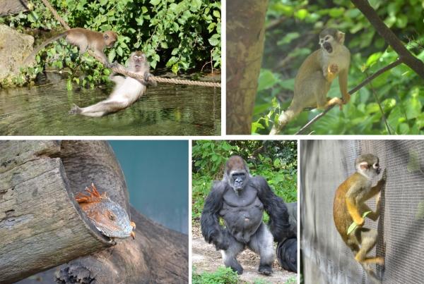 Monkey Jungle, Miami Florida