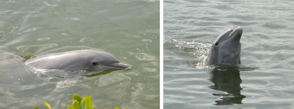 Dolphin Research Center, Marathon Key