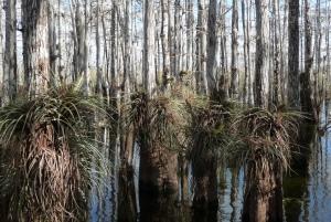 Slough Slog, Everglades National Park