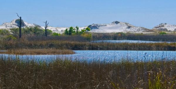 Grayton Beach Sand Dunes