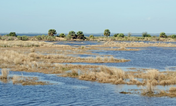 St Marks Wildlife Refuge, Florida