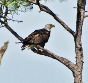 St Marks Wildlife Refuge, Florida