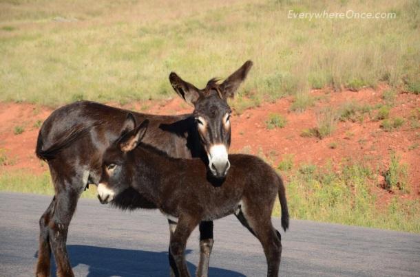 Mamma and Baby Burro