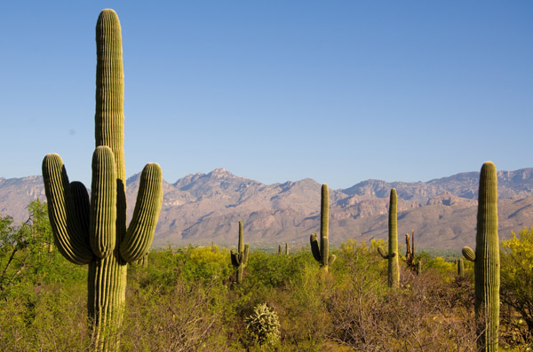 Study:  Kids Bullied in Gym, Sports Avoid Future Activity Saguaro-national-park