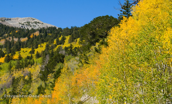 Fall colors in Great Basin National Park, Nevada