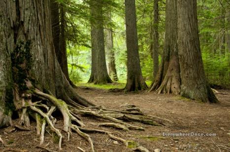 Glacier National Park Trail of the Cedars