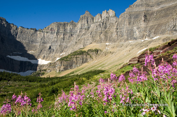 Glacier National Park Wildflowers, Mountains, Landscape