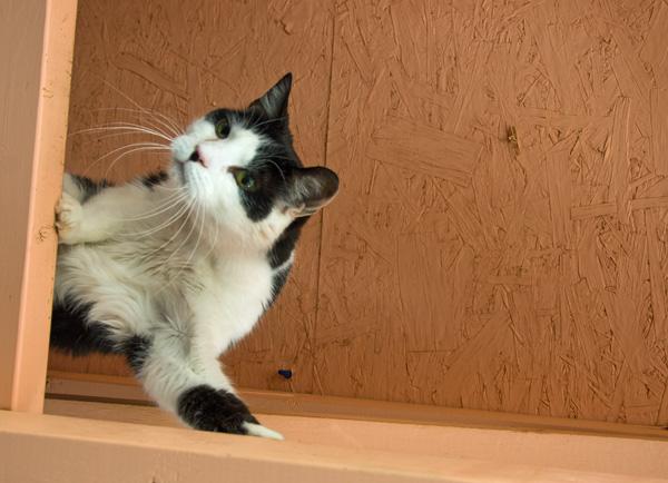 Best Friends Animal Sanctuary Cat World