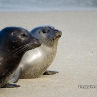 Who Needs SeaWorld?