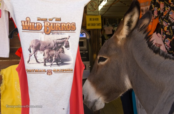 Oatman Arizona Begging Burros
