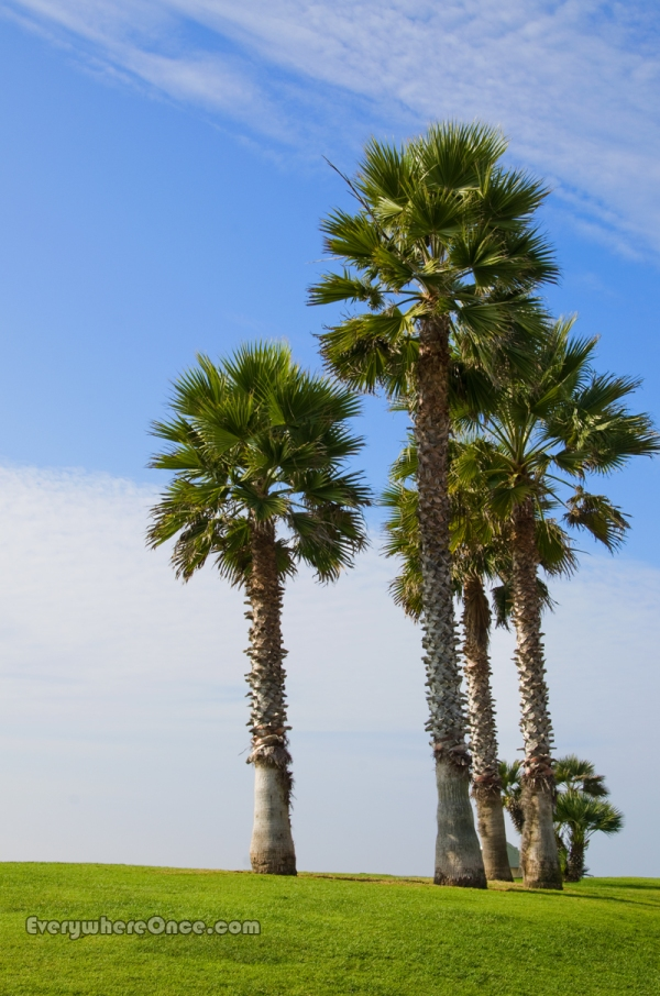 Palisades Park, Palm Trees, Pacific Beach, California