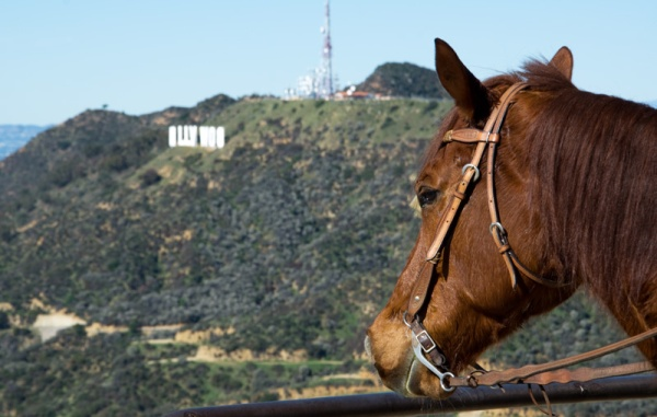 Horse Overlooking the Hollywood Sign