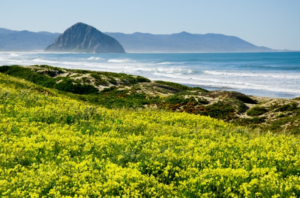 Morrow Bay Wildflowers