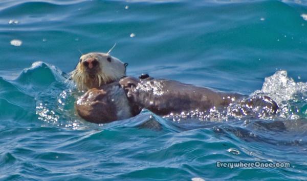 Big Sur Partington Cove Sea Otter