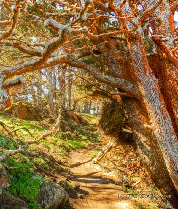 Point Lobos Cypress Grove Trail