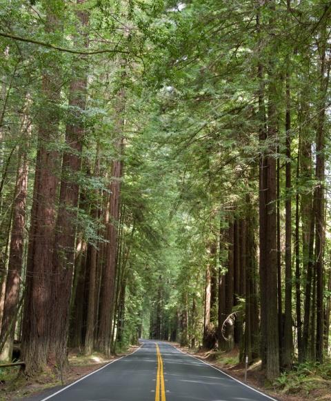 Highway Redwoods
