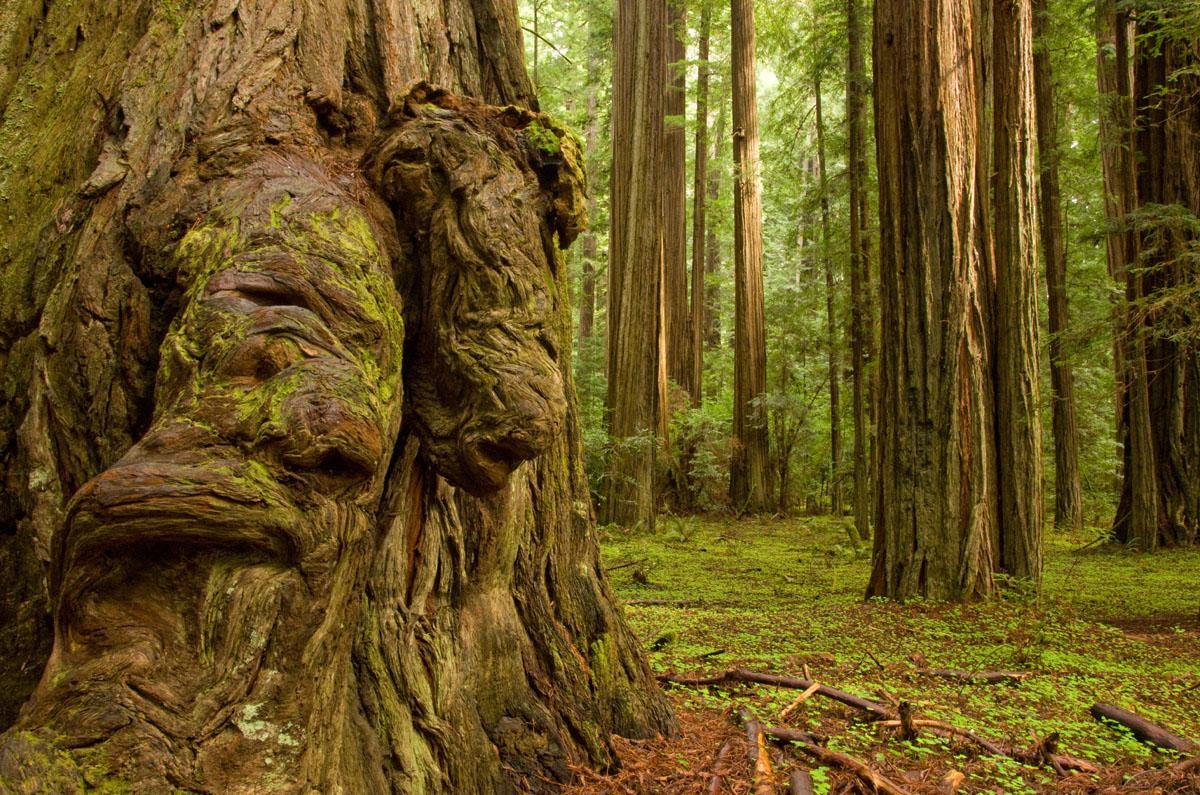 [Image: humboldt-redwood-state-park.jpg]