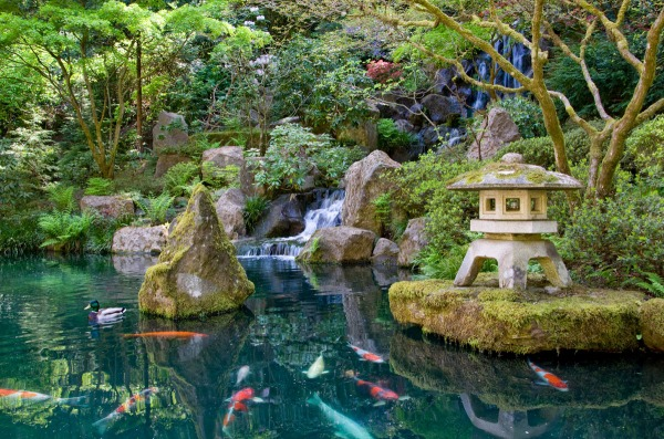"A waterfall cascades in the Strolling Pond Garden, reminiscent of recreational sites the wealthy created on their estates in ancient Japan. Water, the life-giving force, and stone, the ""bones"" of a landscape, are two of the essential elements of a Japanese garden."