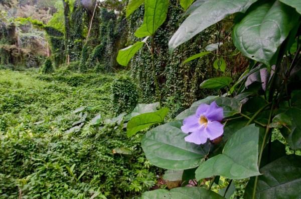 Hawaiian Jungle Flower