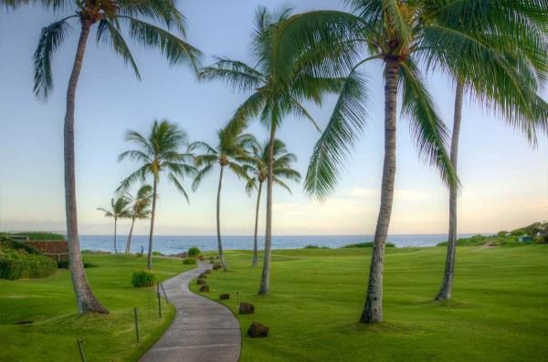 Palm trees near the ocean Kauai