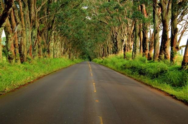 Tunnel of Trees Kauai