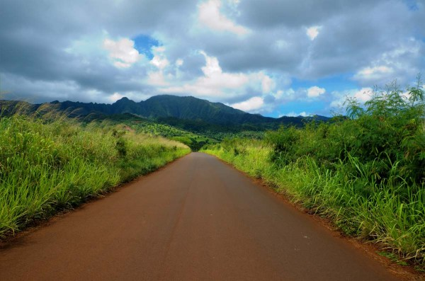 Hawaiian Dirt Road through the jungle