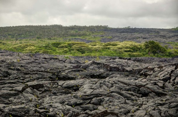 Black lava and green trees