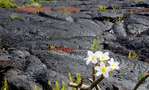 Flowers and Volcanic Rock