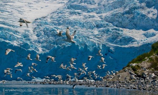 Flock of Birds in Blackstone Bay