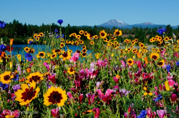 Bend Oregon Wildflowers