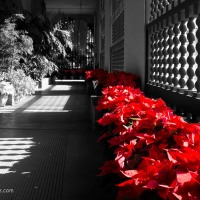 Red and Black in San Diego's Botanical Garden