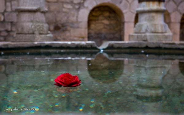 Flower in a Pool at Girona's Arab Bath