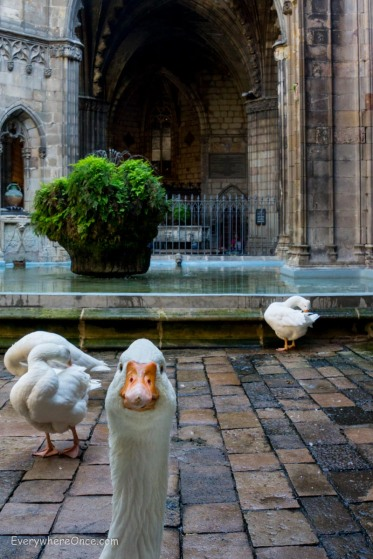 Geese at Barcelona Cathedral