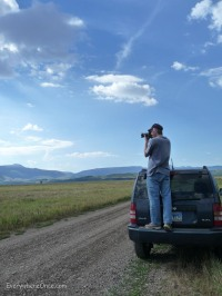 Bison at Grand Teton National Park 1