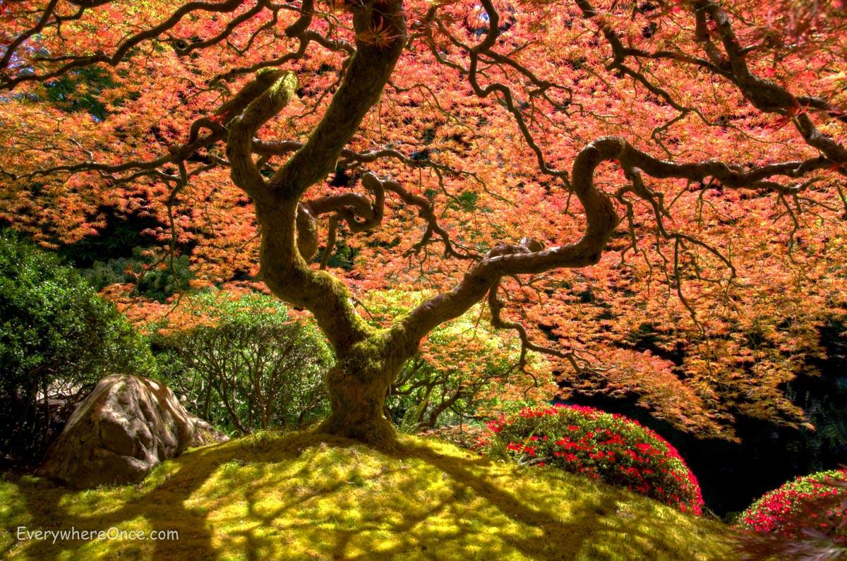Japanese Tea Garden Portland Oregon | Everywhere Once