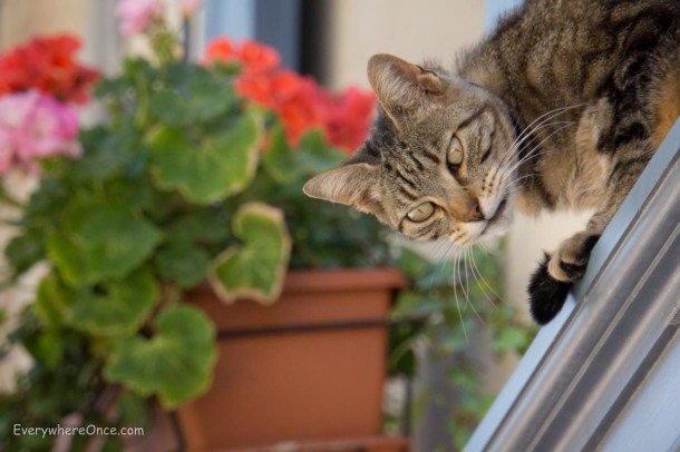 Saint Remy Provence Kitty