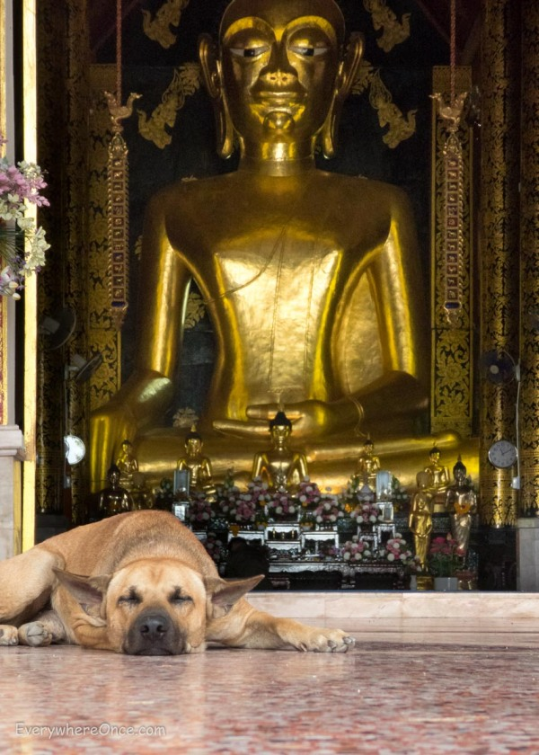 Dog sleeping in front of Buddha statue in Thailand
