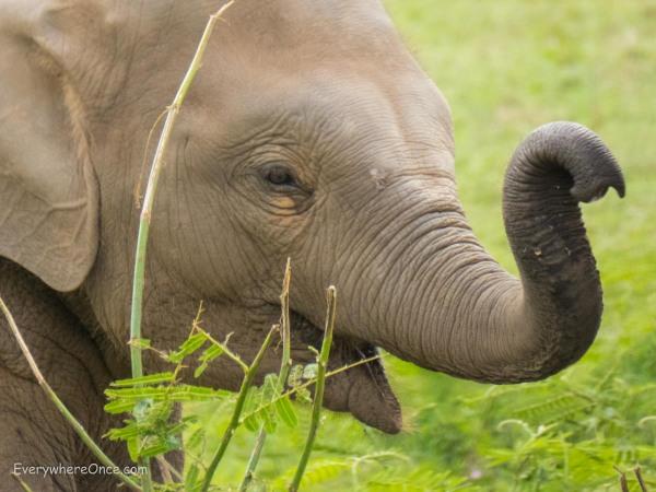 Elephant Nature Park Thailand-11