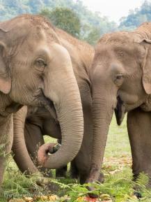 Elephant Nature Park Thailand-16