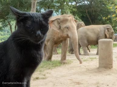 Elephant Nature Park Thailand-2