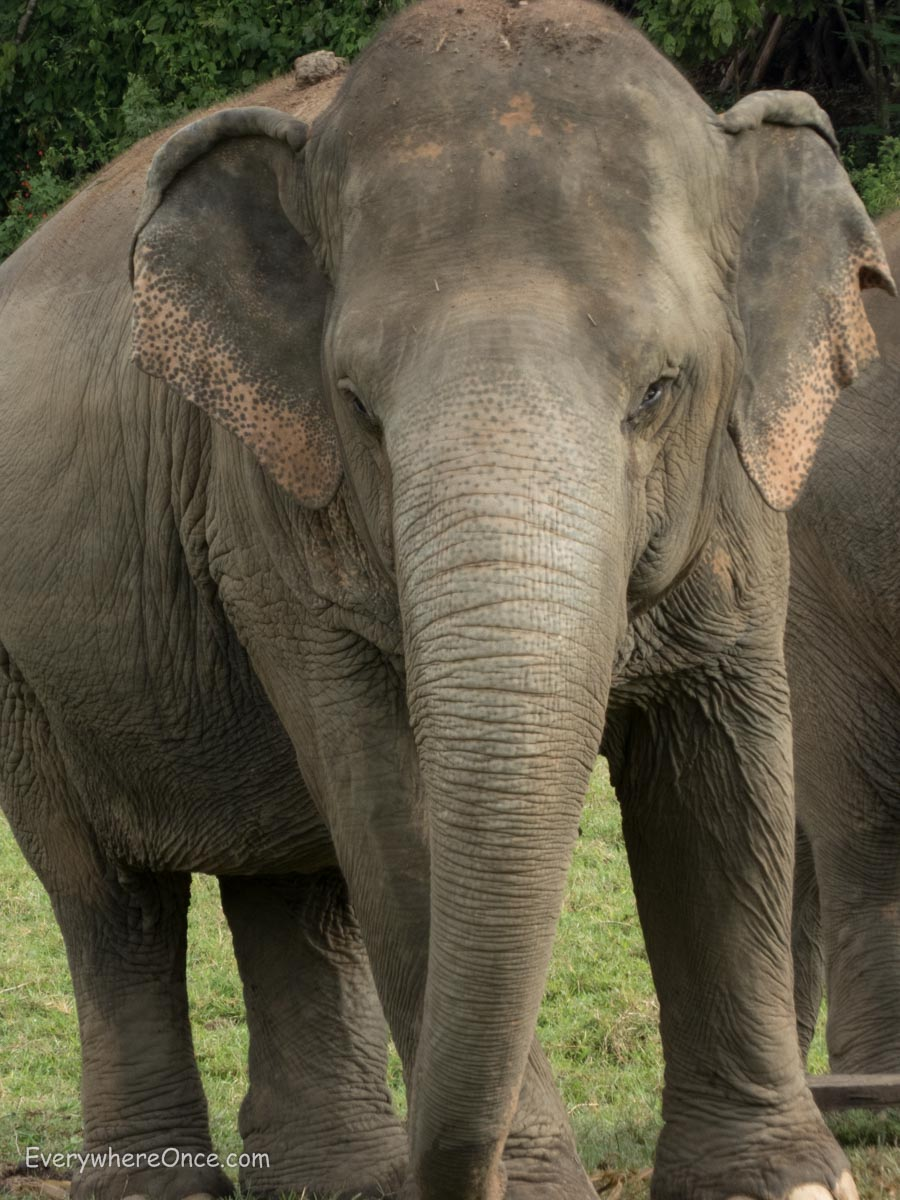 An Ethical Elephant Encounter in Thailand | Everywhere Once