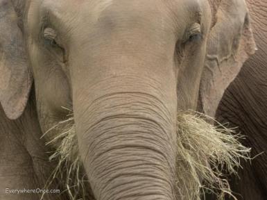 Elephant Nature Park Thailand-39