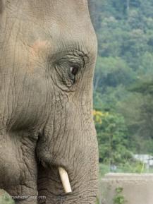 Elephant Nature Park Thailand-43