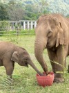 Elephant Nature Park Thailand-14