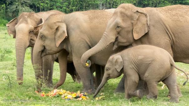 Elephant Nature Park Thailand-15