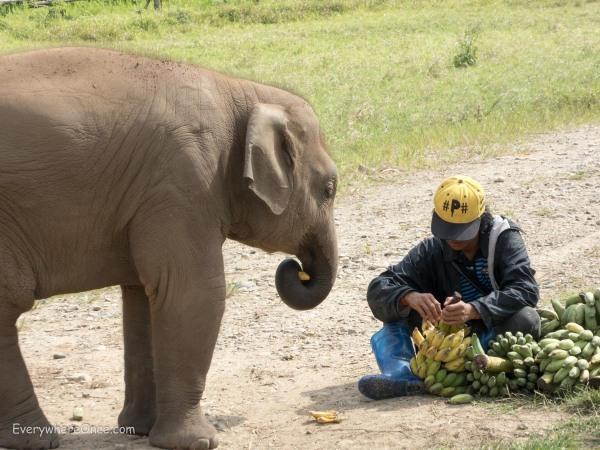 Elephant Nature Park Thailand-18