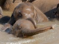 Elephant Nature Park Thailand-29