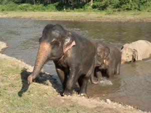 Elephant Nature Park Thailand-31